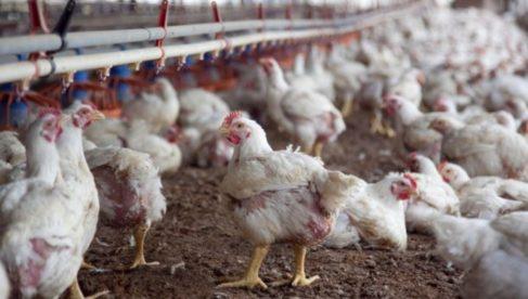 -el-ministerio-de-agroindustria-present-la-primera-vacuna-aviar-desarrollada-totalmente-en-la-argentina-2017-09-08