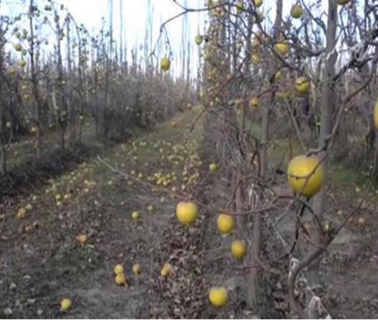 fruta-la-crisis-de-las-economias-regionales-2015-07-16
